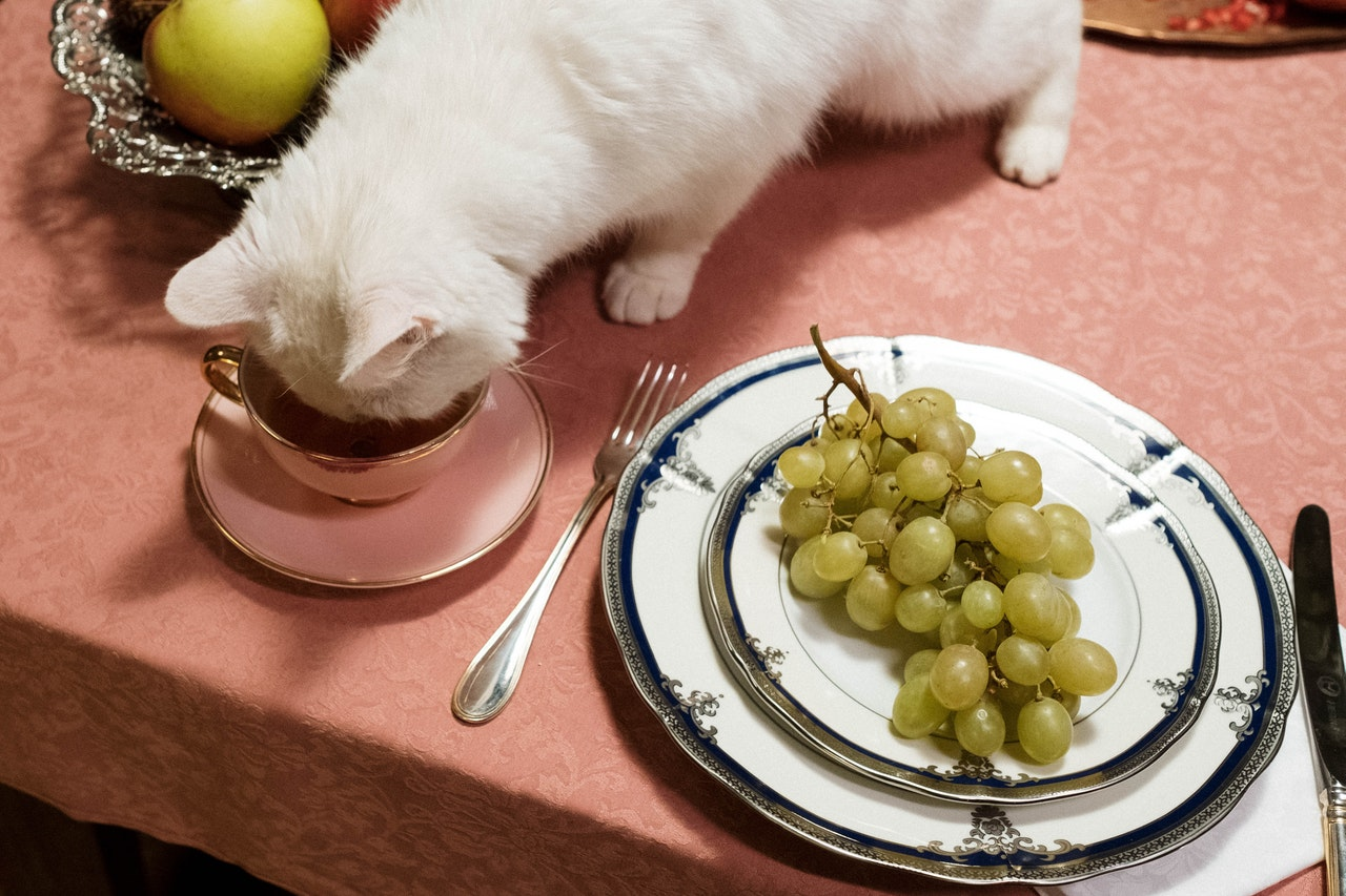 Which Foods are Healthy for Your Pets