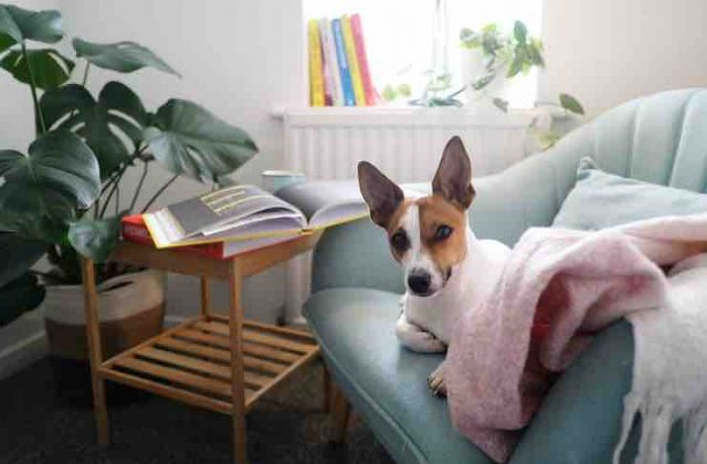 How to Make Your Home Pet Friendly?